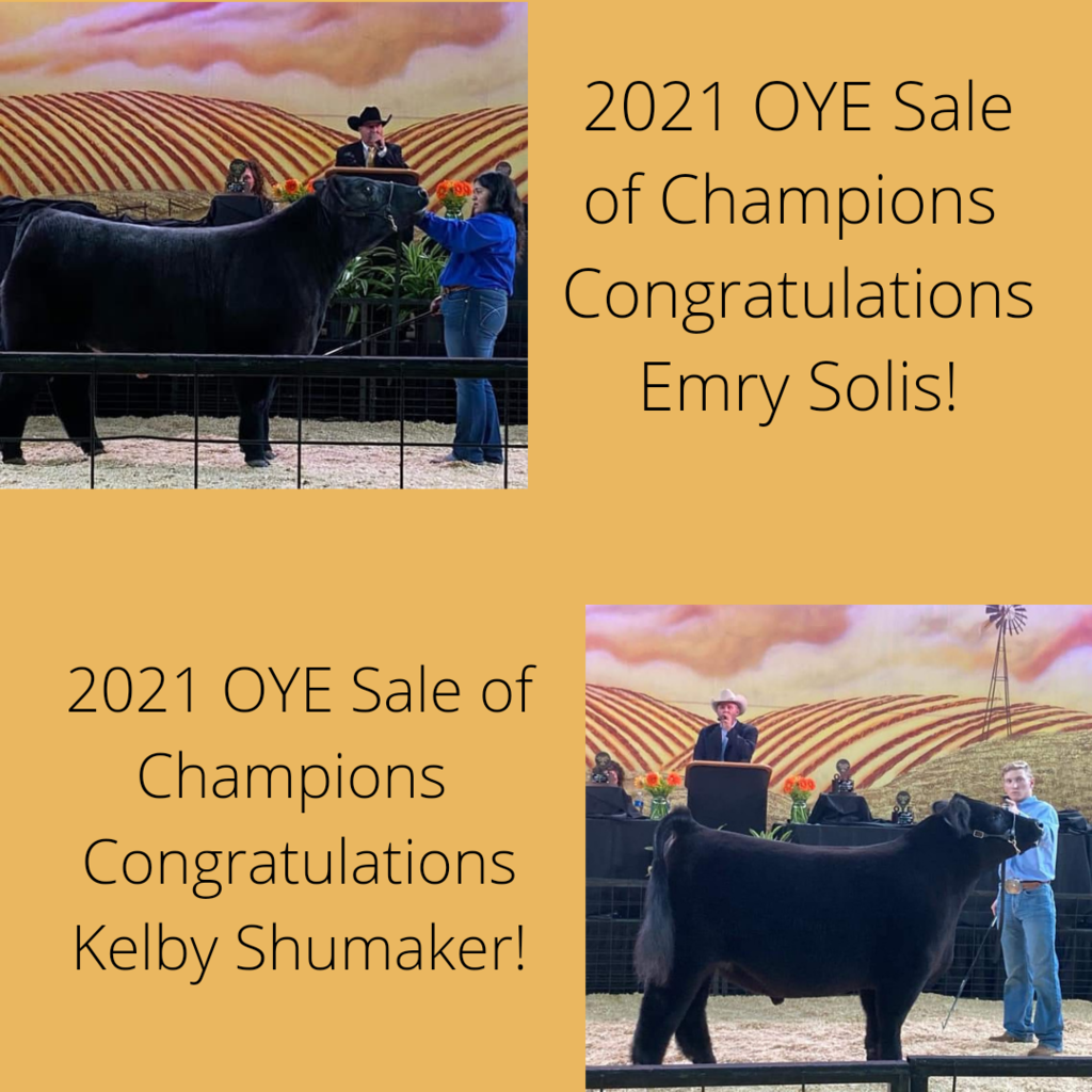 OYE 2021 Sale of Champions